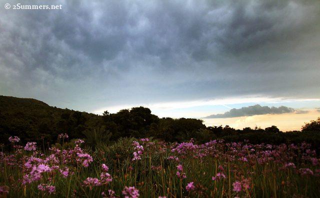 Walter Sisulu clouds