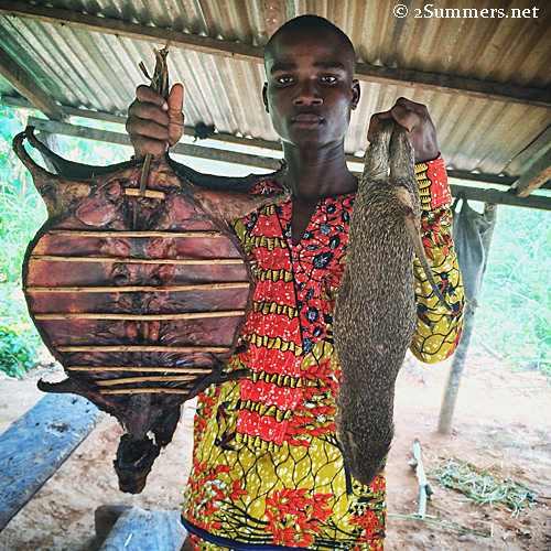 Pop Up Travel Cane Rats In Ghana 2summers
