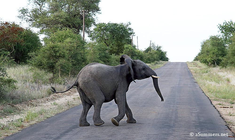 06Elephant crossing