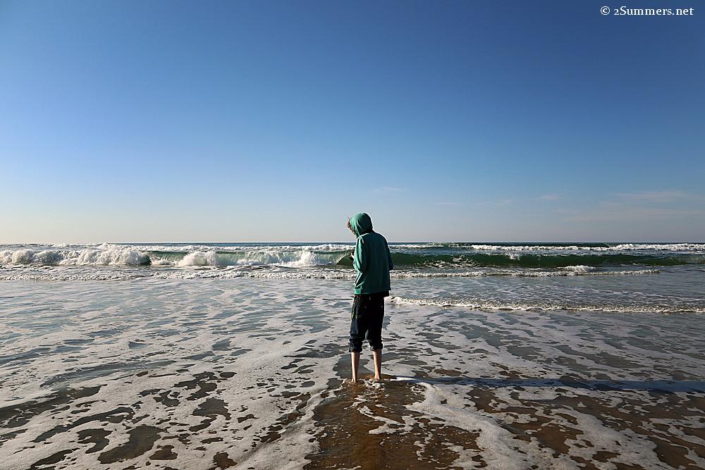Ray in ocean