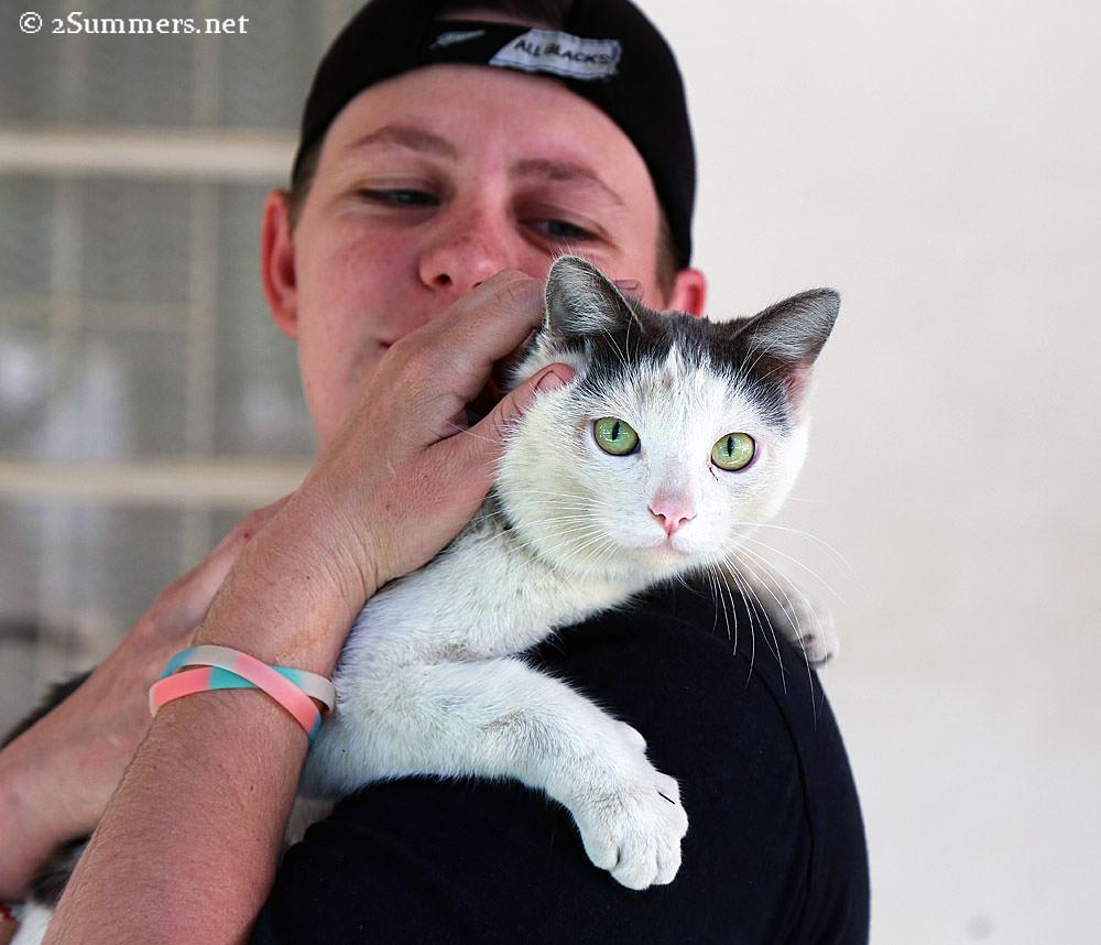 04-Graaff-Reinet-cat
