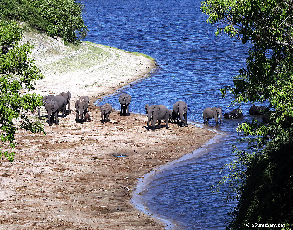 Elephants-and-water