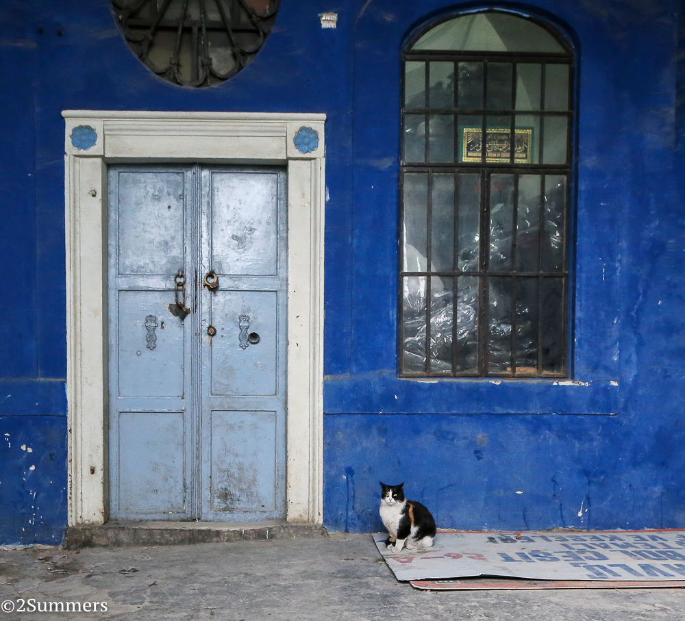 Istanbul cats-0271