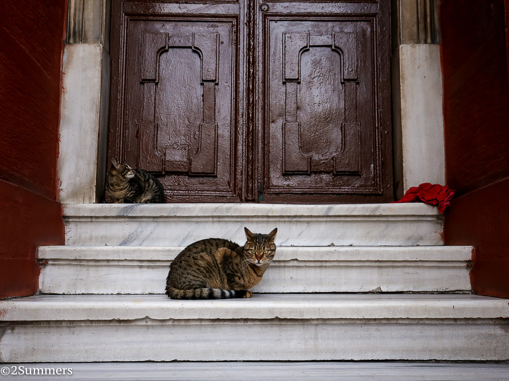 Istanbul cats-8846