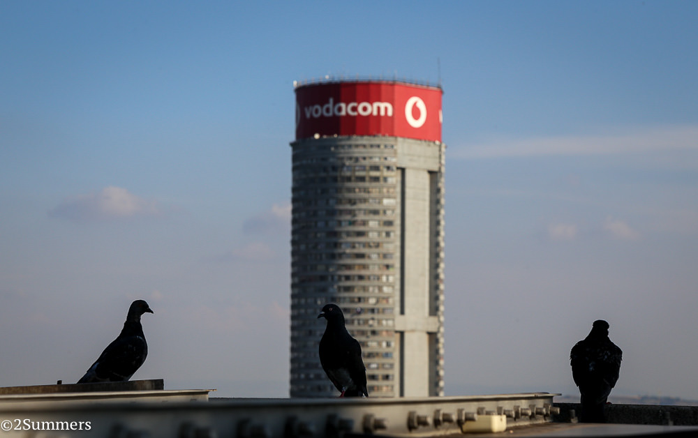 Pigeons and Ponte City
