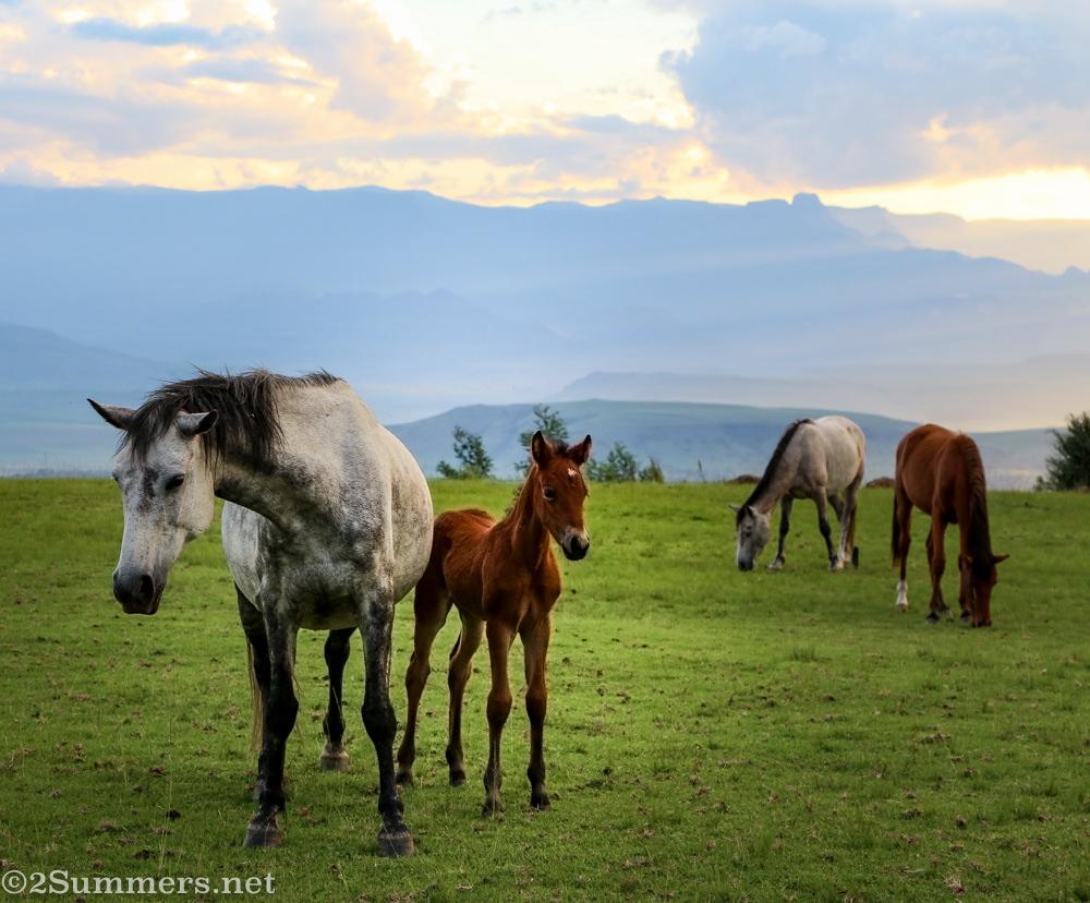 Drakensberg Mountain Retreat horses