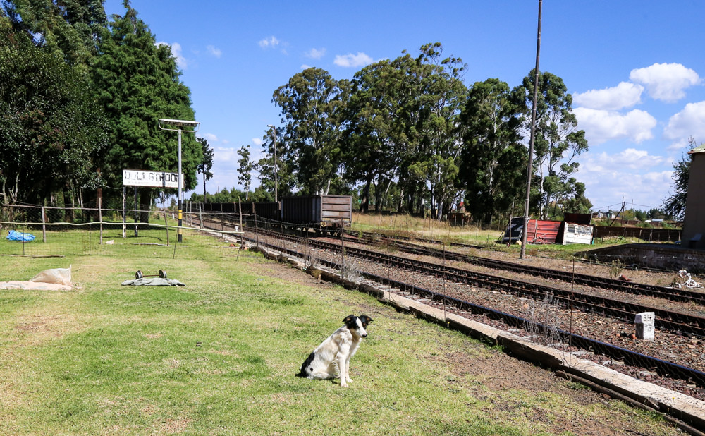 Zoe the dog at railway station-5115
