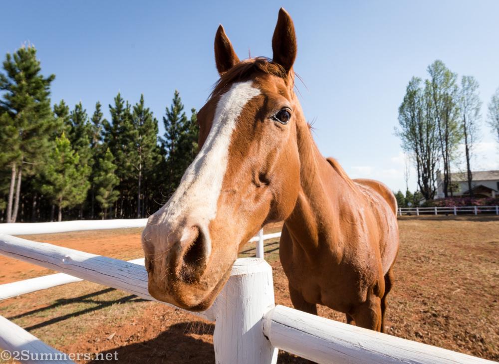 Horse at Glenogle Farm