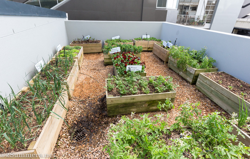 Herb garden at Upper Eastside