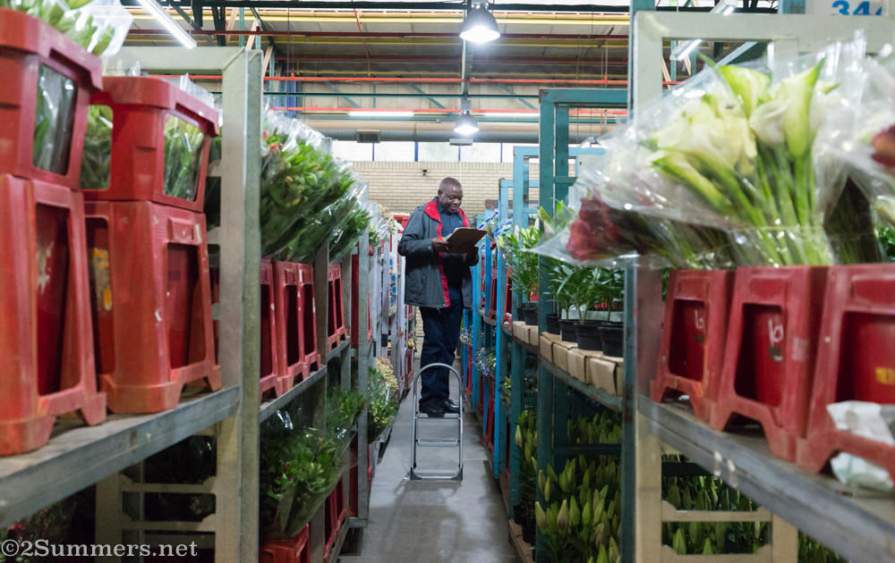 Counting flowers at the Multiflora Market