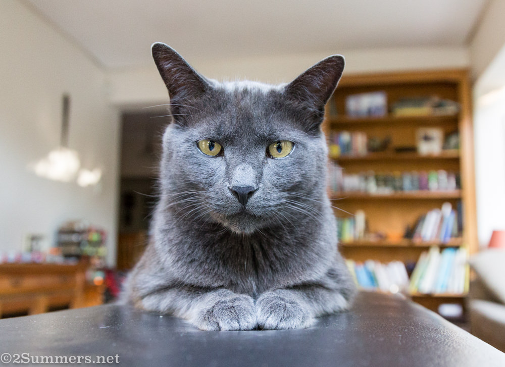 The Melville Cat in the lounge