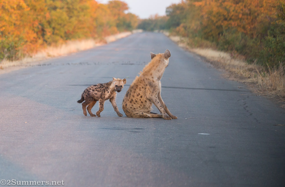 Mom and baby hyena - mom looking away