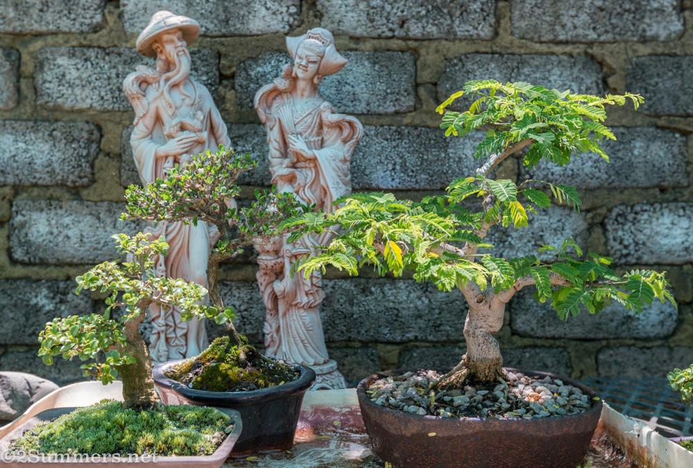 More bonsai at Bonsai Magic