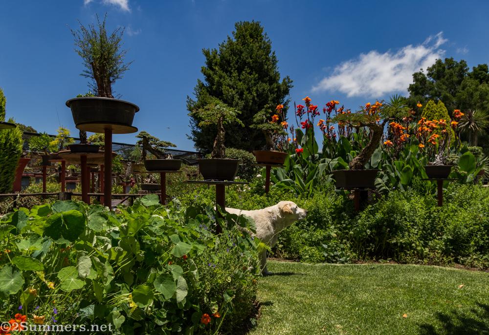 The Steyn garden and dog