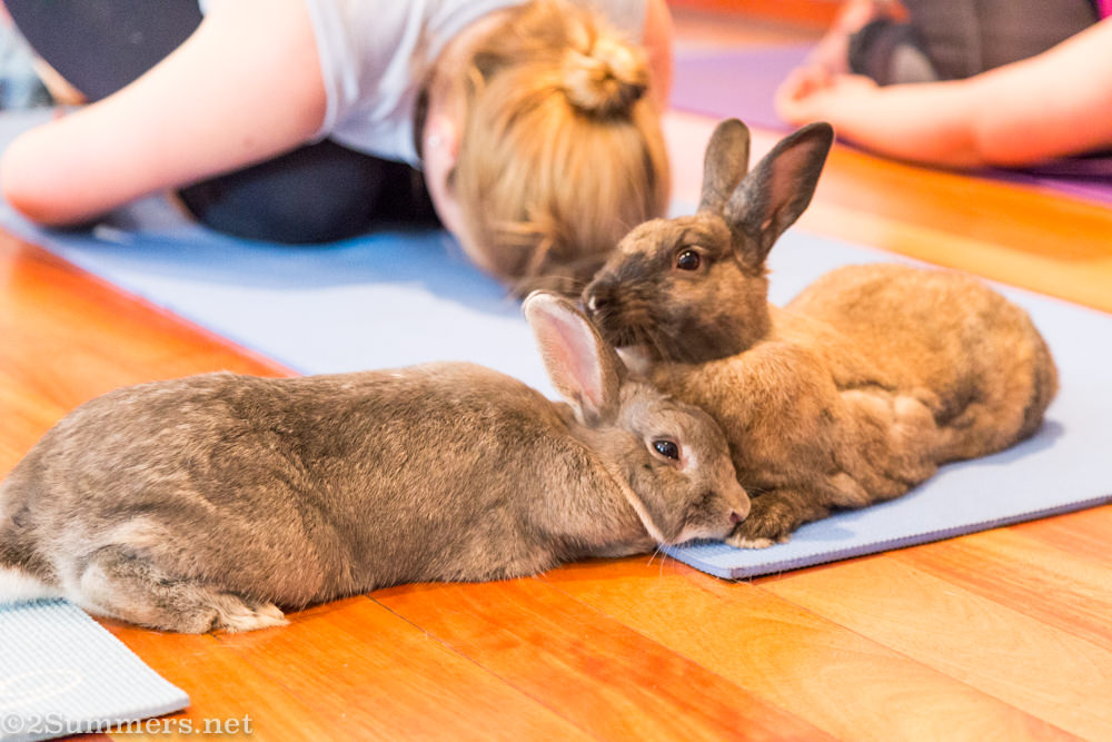 Two bunnies and lady doing yoga