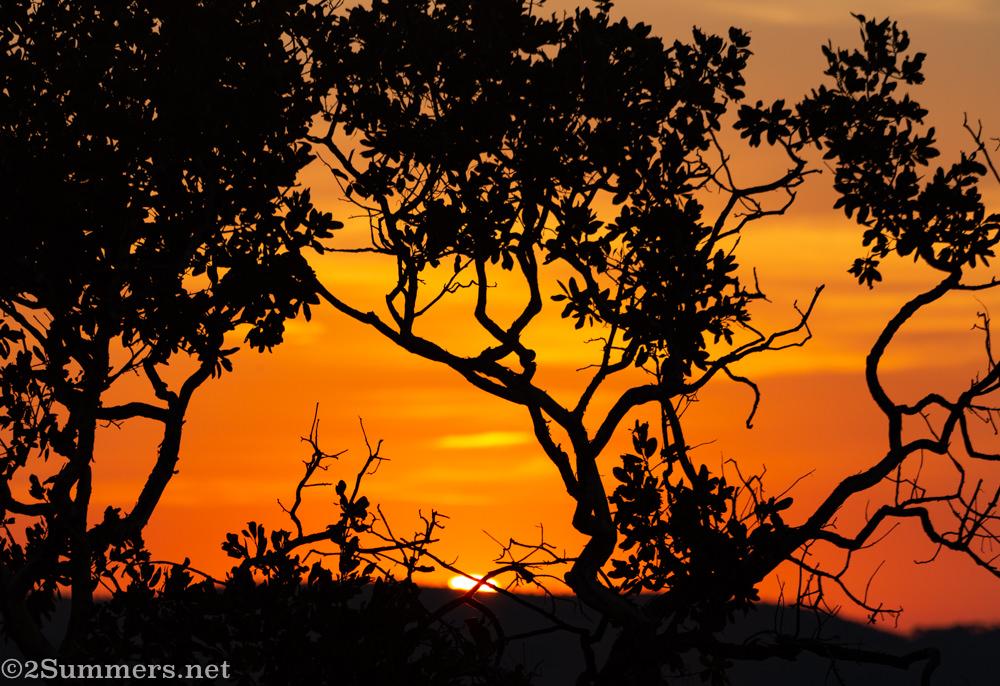 Last sunset in Welgevonden