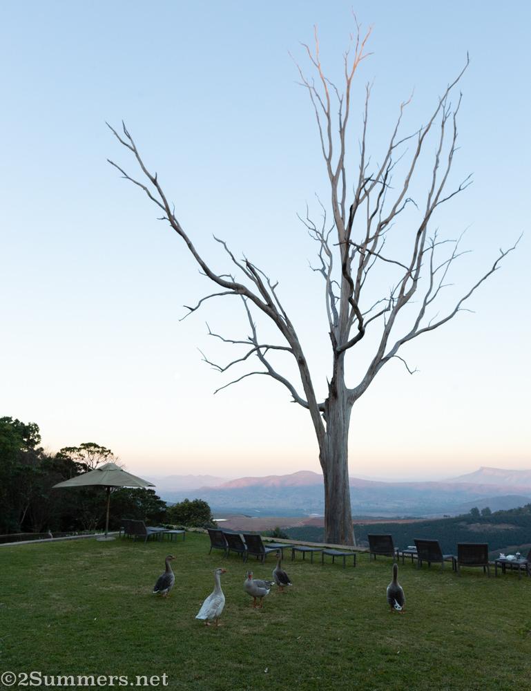 Dead tree at Kings Walden