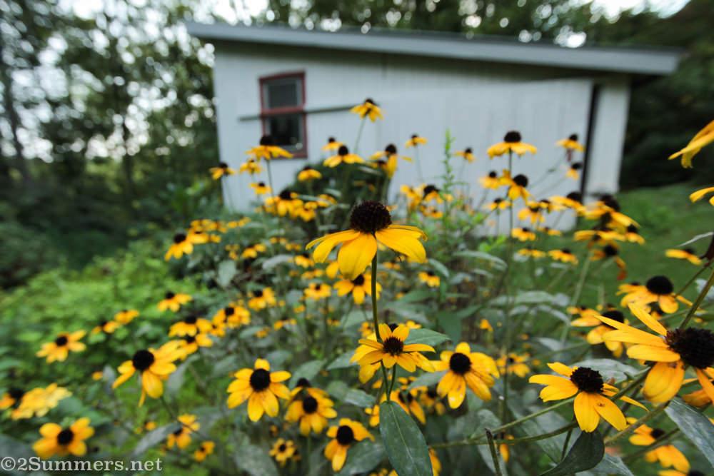 Lockdown Journal: Day 28 (An American Garden)