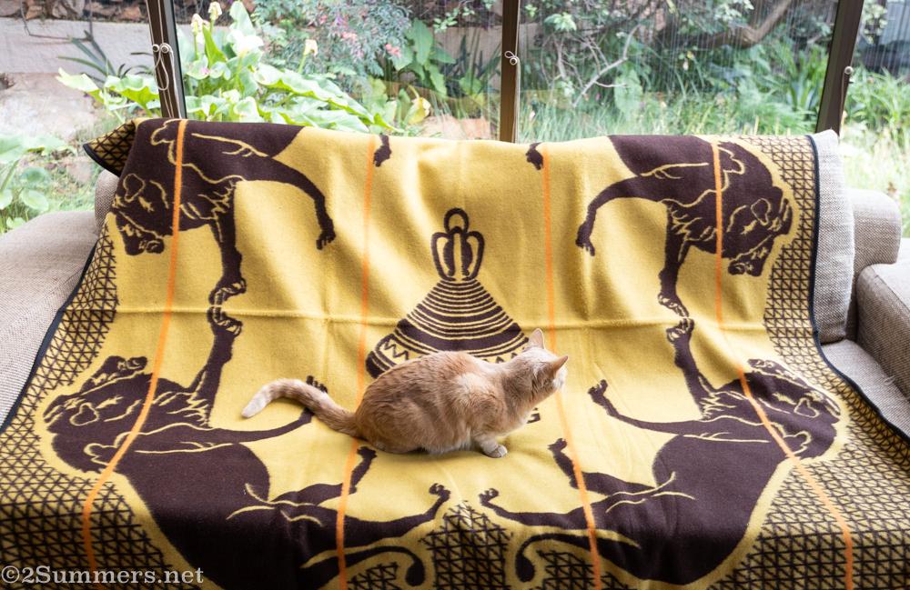 Trixie on Heather's Basotho blanket