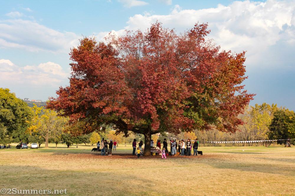 Tree in Delta Park