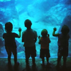Georgia Aquarium kids
