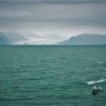 Dolphin Pod Kenai Fjords National Park 1