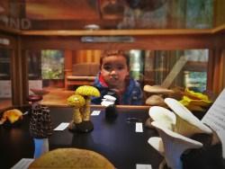LittleMan Mushroom Display Hoh Rainforest Olympic National Park 2