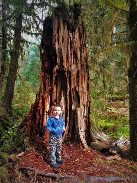 LittleMan and Nursery Stump Hoh Rainforest Olympic National Park 1