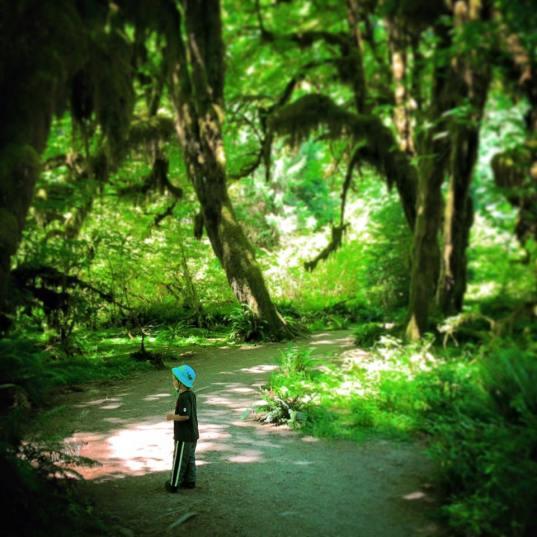 LittleMan at Hoh Rainforest Olympic National Park