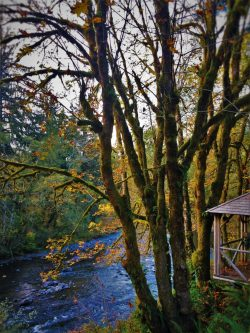 Sol Duc River from Cabin 1