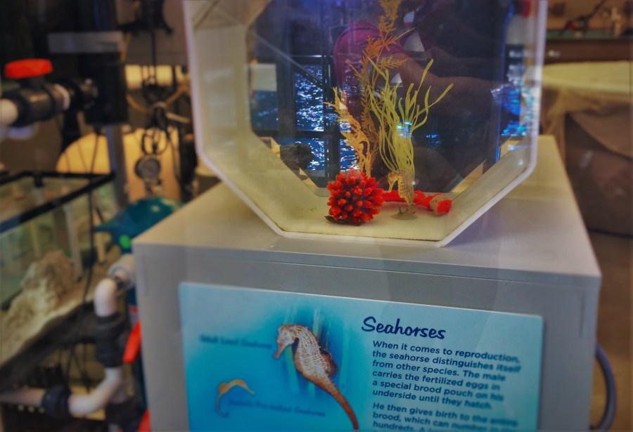 Sea Horse Breeding Tank Behind the Scenes Georgia Aquarium