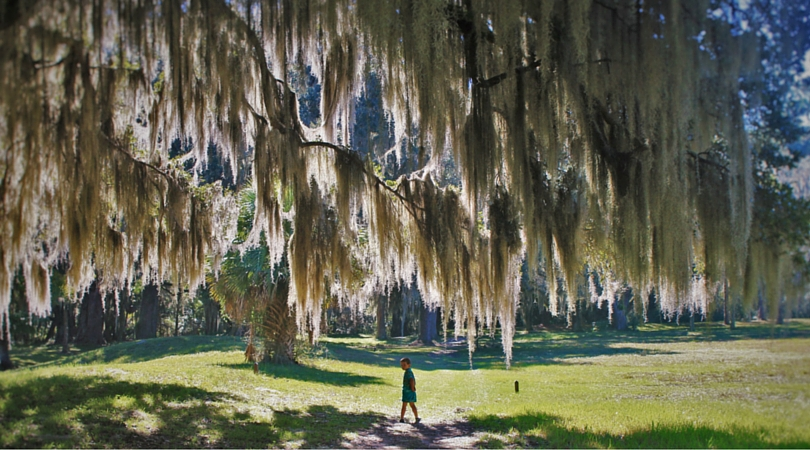 LittleMan and Spanish Moss at Fort Frederica 2traveldads.com