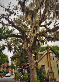 Old Town St Augustine with Spanish Moss 2traveldads.com