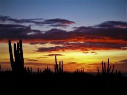 Cactus Sunset Migrino Cabo Mexico 2traveldads.com