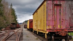 Box Cars in Railroad Graveyard Snoqualmie Washington 1