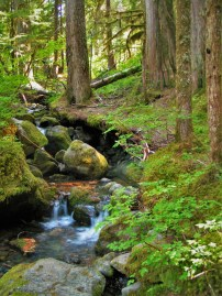 Mossy Forest Creek on Comet Falls Trail in Mt Rainier National Park 2traveldads.com
