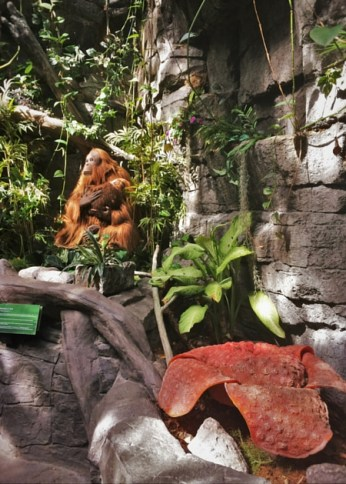 Animatronic Orangutan Denver Downtown Aquarium 2traveldads.com