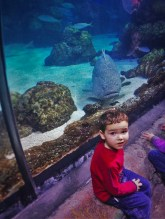 LittleMan in Shark Tube at Denver Downtown Aquarium 1