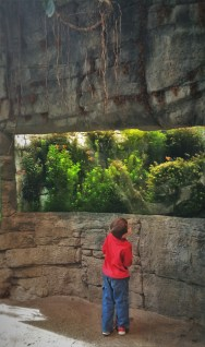 LittleMan in rainforest area at Denver Downtown Aquarium 1