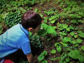 LittleMan smelling White Trillium at Bloedel Reserve Bainbridge Island 1
