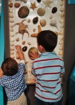 Taylor Kids looking at Shell Diagrams at the Butterfly Pavilion Denver Colorado