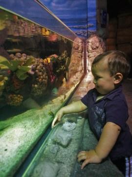 TinyMan and tropical tank at Denver Downtown Aquarium 2