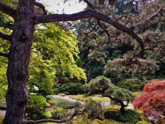 Trees in Japanese Garden at Bloedel Reserve Bainbridge Island 1