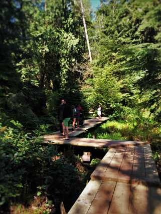 Zigzag Boardwalk and skunk cabbage at Bloedel Reserve Bainbridge Island 1