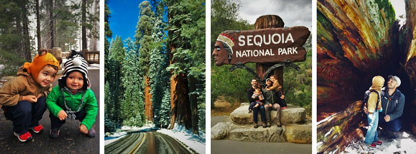 Sequoia National Park header