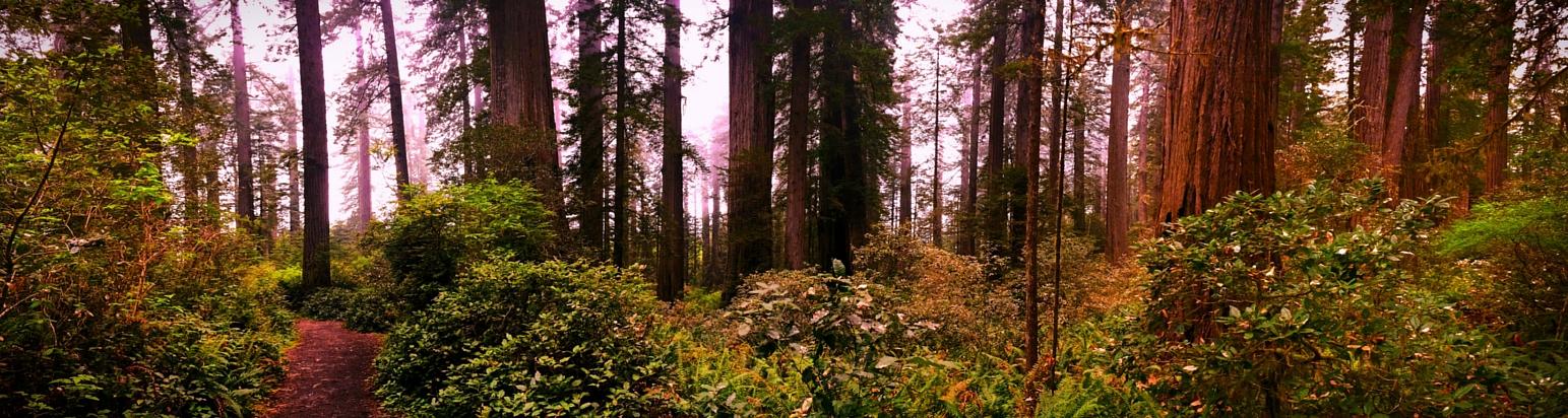 Ladybird Johnson Grove Trail Redwood National Park 2traveldads