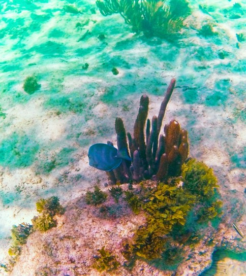 Tropical Reef and Fish Snorkeling in Akumal 2