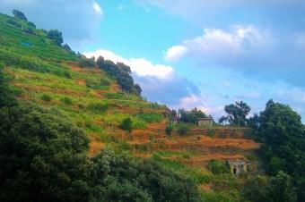 Hillside vineyard in Manarola Cinque Terre Italy 2e