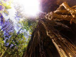 Roots at Cenotes Dos Ojos Playa Del Carmen Mexico