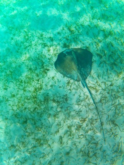 Snorkeling with Sting Ray in Akumal 2